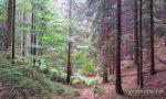 ᐅ Abenteuerwandern mit Kindern: Die Schönheit von Regen im Wald