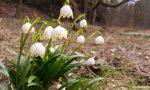 ᐅ Sächsische Schweiz: Wanderung durch die Märzenbecherwiesen im Polenztal